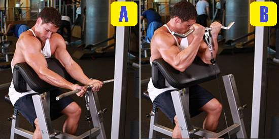 cable preacher curl.png