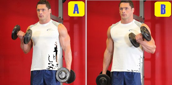 dumbbell alternate curl.png