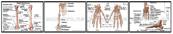 kemikler 3 küçük resim.png