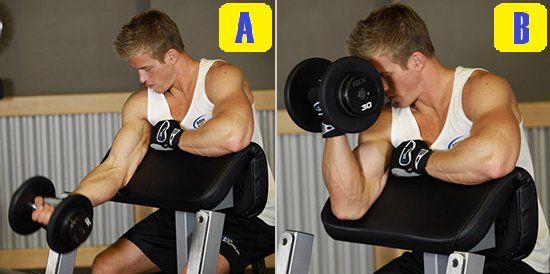 one arm preacher curl.png
